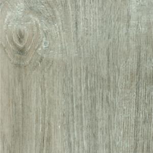 Sardinia Oak